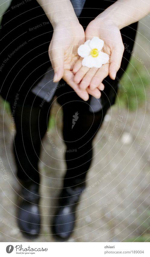 Mensch Frau Jugendliche Hand weiß Sonne Winter Freude Erwachsene Leben Herbst Schnee Garten Stil Kunst Felsen