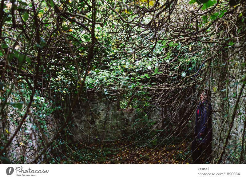 Caché ruhig Abenteuer Freiheit Mensch feminin 1 Natur Pflanze Efeu Grünpflanze Ast Unterholz Wald Ruine stehen außergewöhnlich dunkel wild grün Traurigkeit