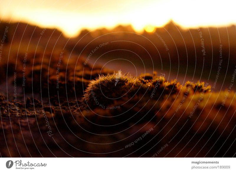 Abendstimmung auf dem Lande Natur Himmel Pflanze gelb Herbst Landschaft Luft Stimmung braun Feld gold Erde Moos Sinnesorgane