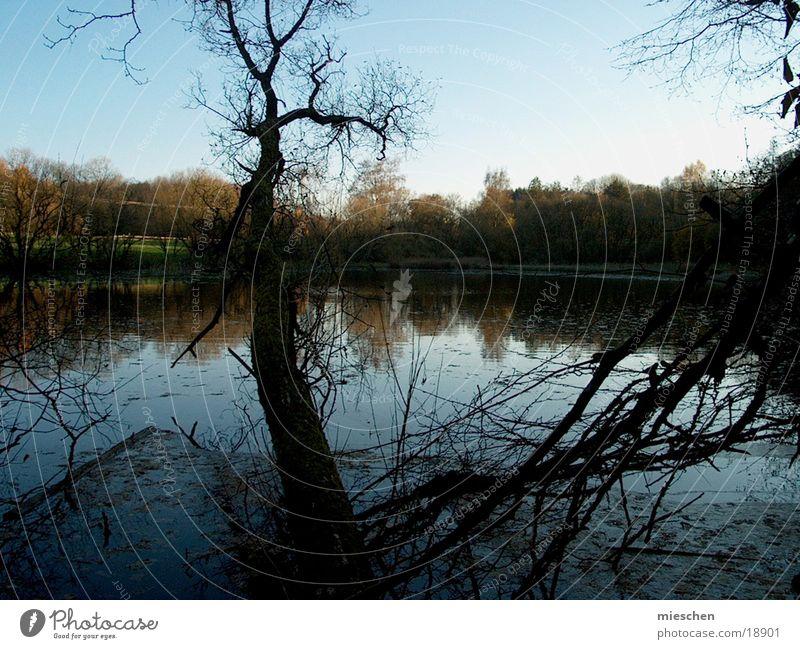 Seeblick II Teich Herbst kalt Baum Wasser Blauer Himmel