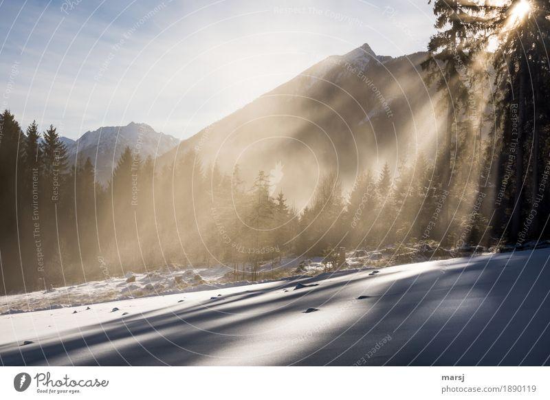 Ja, weiße Weihnachten! Himmel Natur Landschaft Erholung ruhig Winter Wald Herbst Schnee außergewöhnlich Stimmung leuchten Zufriedenheit Nebel Eis elegant