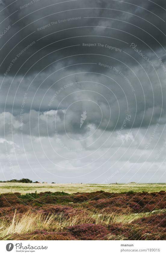 Sturmtief Erholung ruhig Ferien & Urlaub & Reisen Natur Landschaft Wolken Gewitterwolken schlechtes Wetter Unwetter Wind Gras Sträucher Wiese Feld Heide