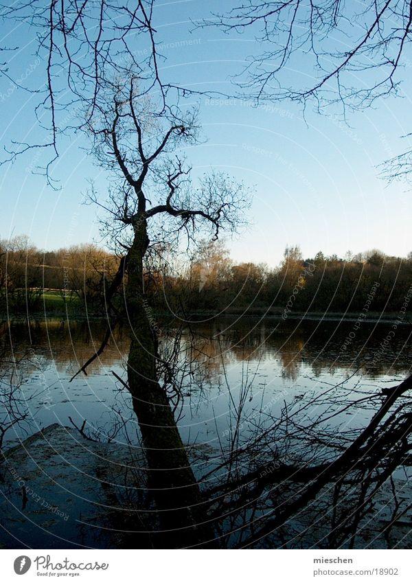 Seeblick Wasser Meer Wald kalt Herbst Teich