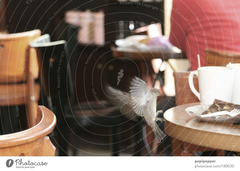 Dieb Kaffeetrinken Geschirr Teller Tasse Gabel Stuhl Tisch Restaurant Gastronomie Rücken Tier Wildtier Vogel beobachten Bewegung entdecken fliegen füttern frech