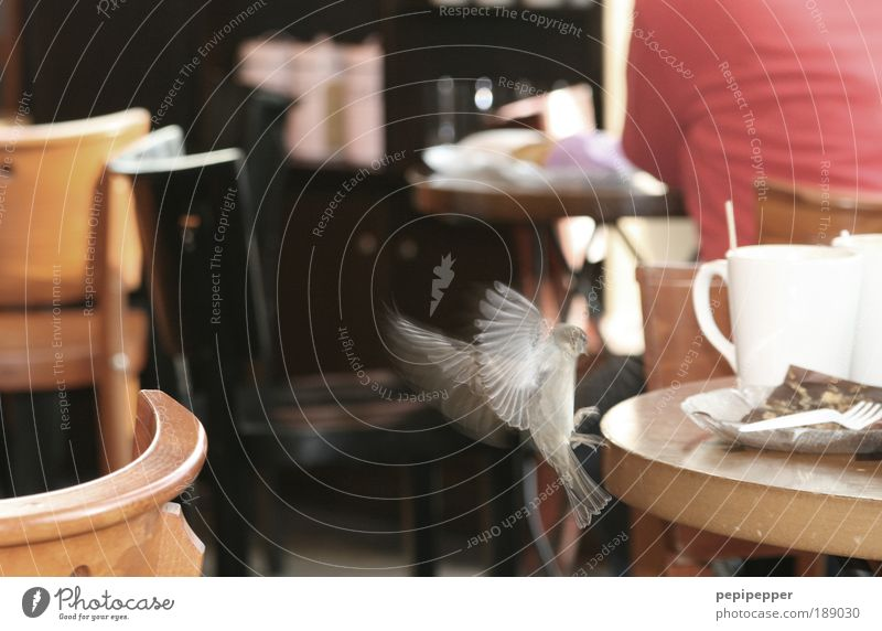 Dieb Tier Bewegung fliegen Vogel Wildtier Ernährung Rücken Tisch Geschwindigkeit beobachten niedlich Neugier Stuhl Gastronomie entdecken Restaurant