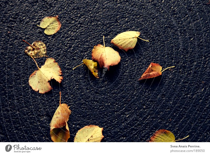 Ich werde dir den Ast absägen, an dem du dich festhälst Natur blau Blatt gelb Straße kalt Herbst Umwelt Stimmung Park liegen Asphalt fallen Stengel Vergangenheit Langeweile