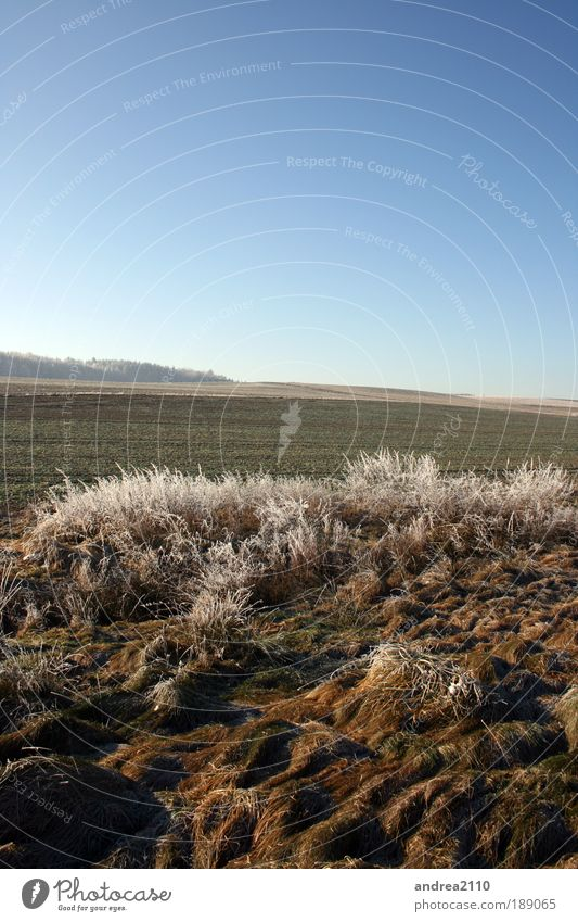 Frost01 Natur Himmel Sonne Pflanze Winter Landschaft Umwelt Erde Surrealismus