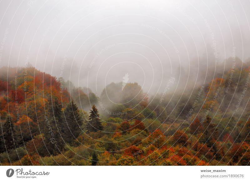 Herbstregen im Bergwald. Buntes Holz in den Wolken Ferien & Urlaub & Reisen Tourismus Berge u. Gebirge Natur Landschaft Himmel Wetter Unwetter Nebel Regen Baum