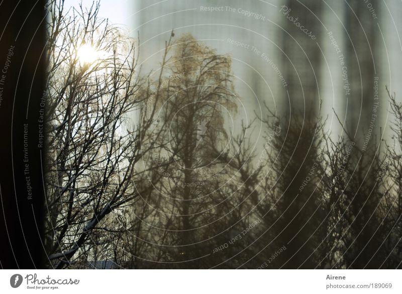 Hoffnungsschimmer Baum Sonne Winter Fenster Stimmung trist Sehnsucht Neugier Vorhang Vorfreude