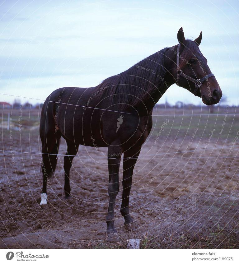 Horse in Karlshorst Tier Erde Pferd stehen