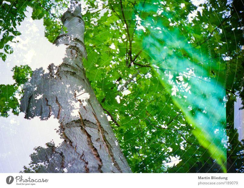 doppel#3 Natur weiß Baum grün Pflanze Blatt gelb Holz träumen braun Umwelt Perspektive Lomografie natürlich außergewöhnlich Neugier