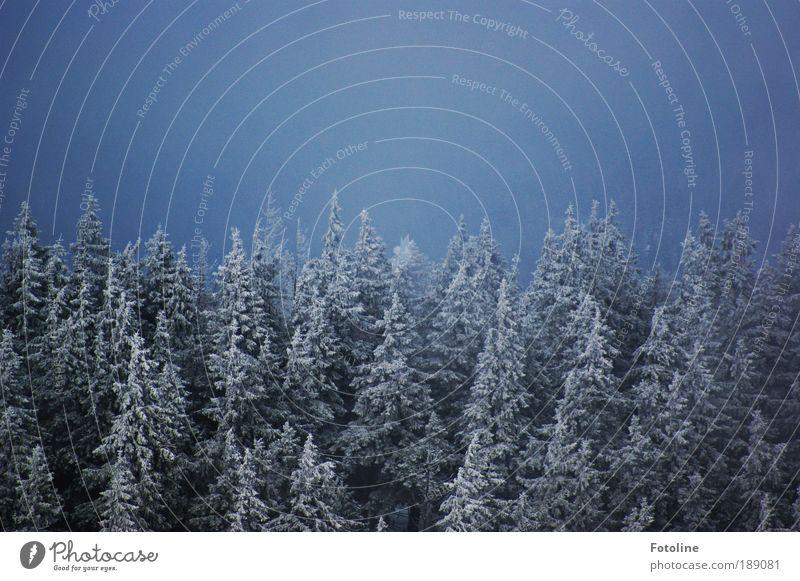 Winterwald Natur Himmel Baum blau Pflanze Wald dunkel kalt Schnee Berge u. Gebirge Landschaft Luft Eis Wetter Umwelt