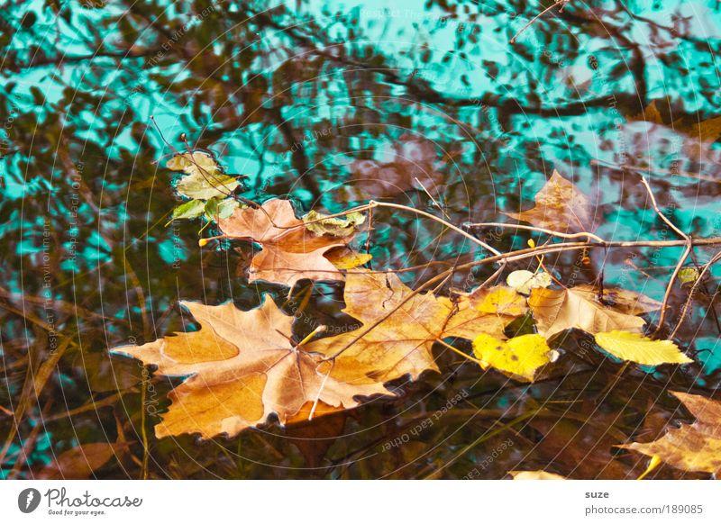Aquarell Umwelt Natur Landschaft Wasser Herbst Baum Blatt alt fallen ästhetisch gold Gefühle Zeit Herbstlaub herbstlich Jahreszeiten Laubwald Färbung