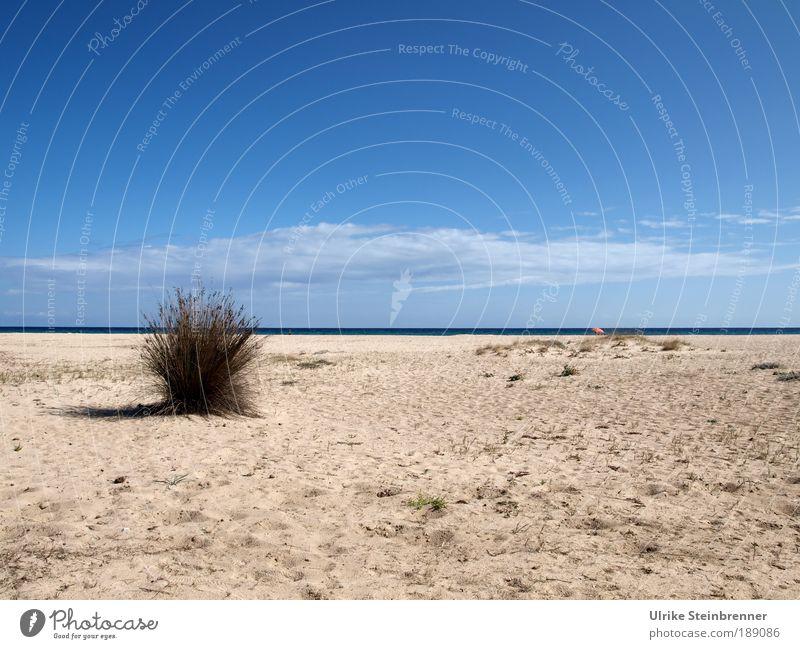Leerer Strand vor Meereslinie mit kleinem, einsamen Sonnenschirm Erholung ruhig Ferien & Urlaub & Reisen Sonnenbad Insel Landschaft Pflanze Sand Luft Wasser