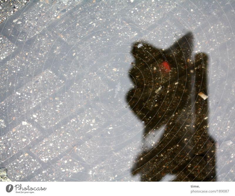 Rotlichtbezirk Wasser rot Straße Wege & Pfade Straßenverkehr Verkehr Technik & Technologie stoppen feucht diagonal Ampel Warnhinweis Pfütze Pflastersteine parallel Hinweis