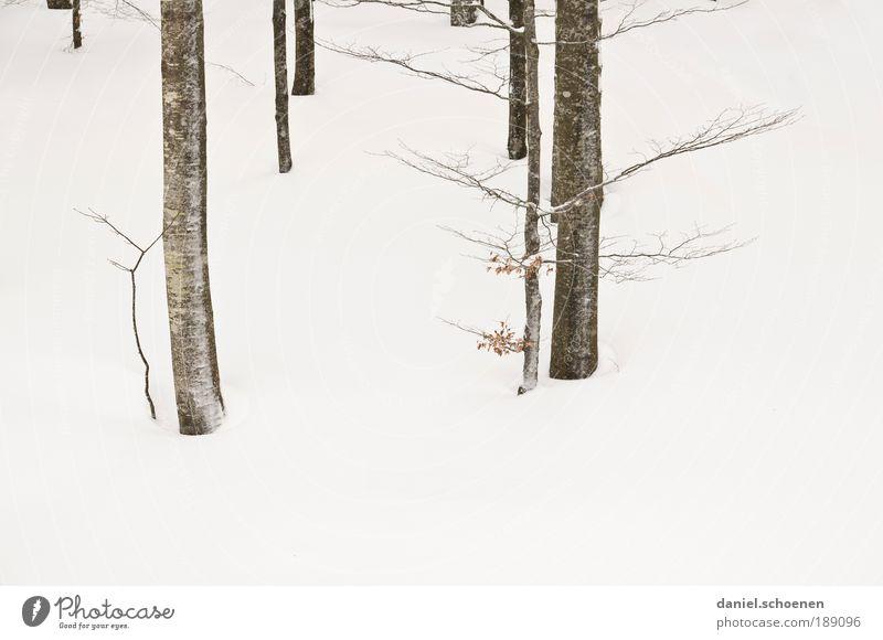 Realität !! Umwelt Natur Pflanze Winter Eis Frost Schnee Baum hell weiß abstrakt Baumstamm Ast Buche Menschenleer
