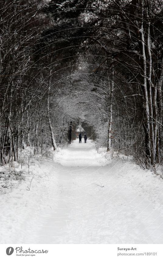 Snow-Walk Mensch Natur weiß Winter Wald kalt Schnee Erholung Bewegung Wege & Pfade Landschaft Freundschaft Zusammensein Zeit Pause Freizeit & Hobby
