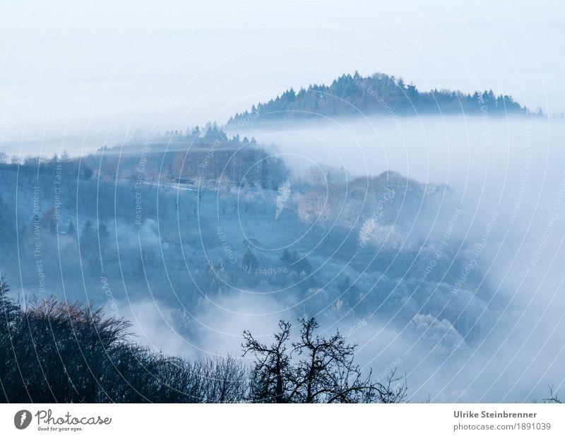 Frostiger Schwarzwald 1 Umwelt Natur Landschaft Pflanze Himmel Sonnenlicht Winter Klima Wetter Nebel Eis Baum Sträucher Nutzpflanze Tanne Obstbaum Feld Wald