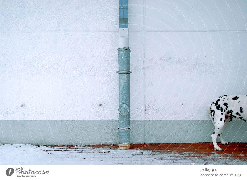 arschkalt Stadt Winter Tier Wand Hund Mauer warten Fassade Sicherheit Schutz Fell Warmherzigkeit Eisenrohr Fleck Pfote Haustier