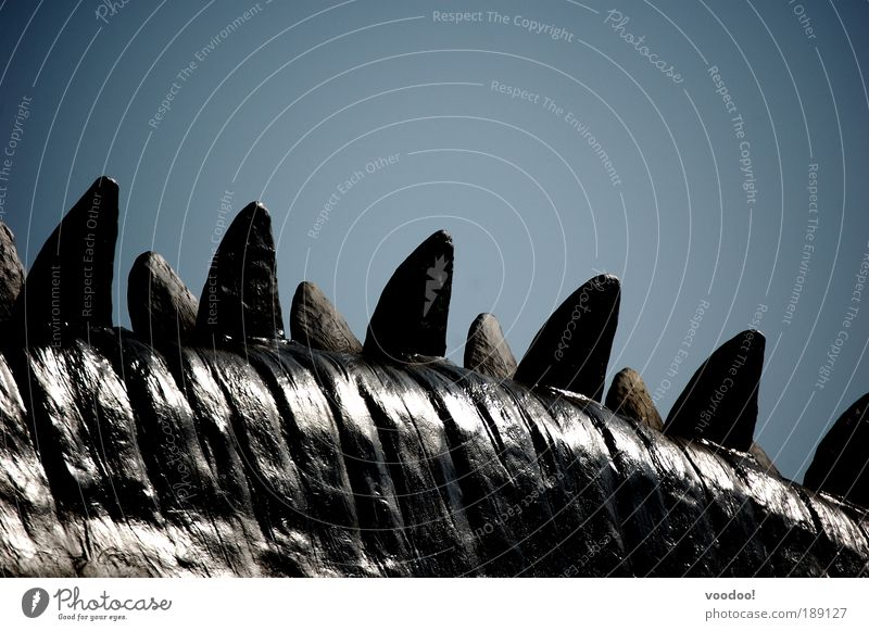 Urzeitkrebse XXL alt blau Tier ruhig Wildtier groß Reptil stachelig gigantisch Schottland Ungeheuer Dinosaurier ausgestorben Naturkatastrophe