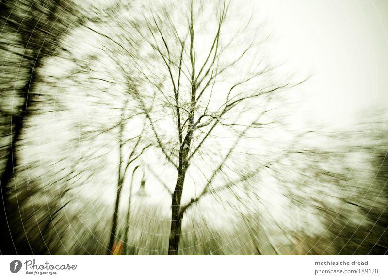KURZ VOR DER OHNMACHT Himmel Natur weiß schön Baum Blatt Winter Wald kalt Schnee Umwelt Landschaft Bewegung Park Eis Horizont