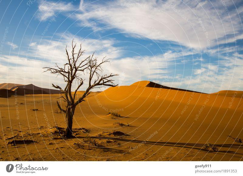 Sossusvlei (Namibia) Himmel Natur Pflanze blau Sommer schön Sonne Baum Landschaft Wolken Tier Wärme Umwelt Frühling Herbst außergewöhnlich