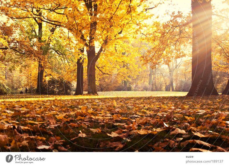 Erinnerung Umwelt Natur Landschaft Herbst Baum Blatt Park Wiese ästhetisch fantastisch schön gelb gold Gefühle Zeit Herbstlaub herbstlich Jahreszeiten Laubwald