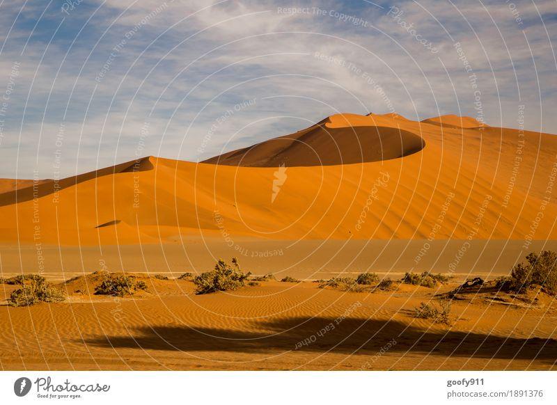 Sossusvlei (Namibia) Umwelt Natur Landschaft Pflanze Urelemente Erde Sand Himmel Wolken Sommer Schönes Wetter Wärme Dürre Sträucher Hügel Wüste Düne Afrika