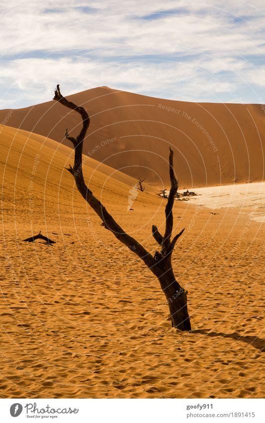 Deadvlei (Namibia) Umwelt Natur Landschaft Pflanze Tier Urelemente Erde Sand Luft Himmel Wolken Sonne Sonnenlicht Sommer Herbst Schönes Wetter Baum Hügel Wüste