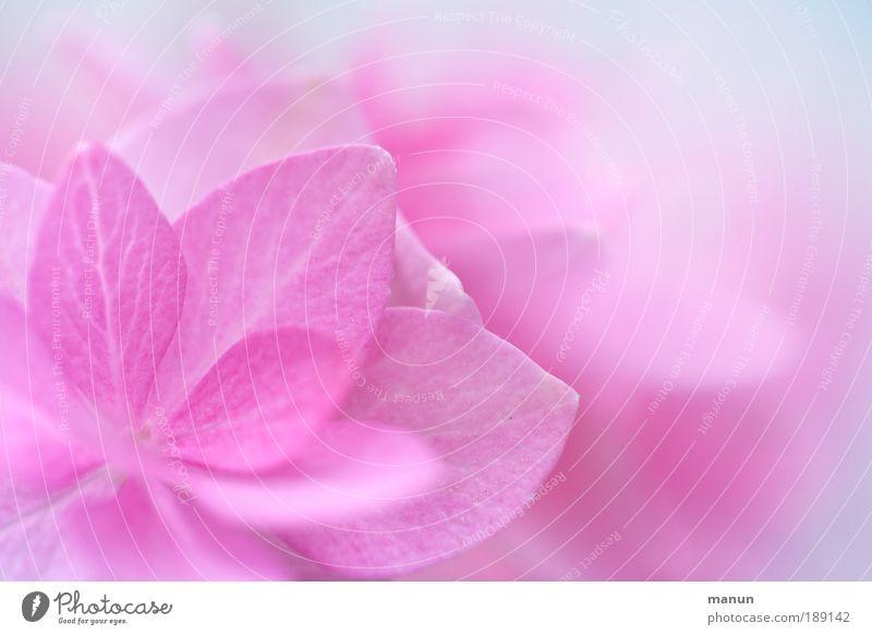 pink cup II Design harmonisch Wohlgefühl Sinnesorgane Erholung Duft Taufe Gartenarbeit Gärtnerei Natur Frühling Blume Blatt Blüte Freundlichkeit Fröhlichkeit