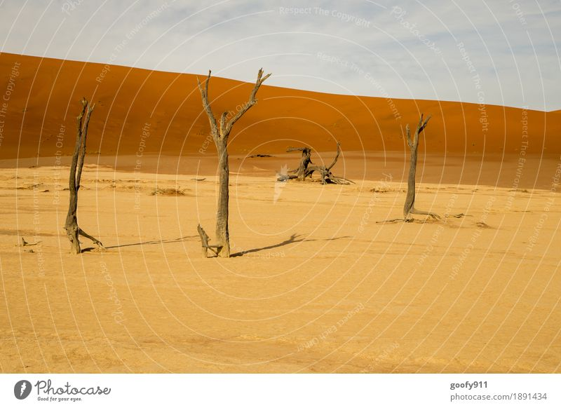 Deadvlei (Namibia) Umwelt Natur Landschaft Pflanze Urelemente Erde Sand Luft Himmel Wolken Horizont Sonnenlicht Sommer Wärme Dürre Baum Hügel Wüste Düne Afrika
