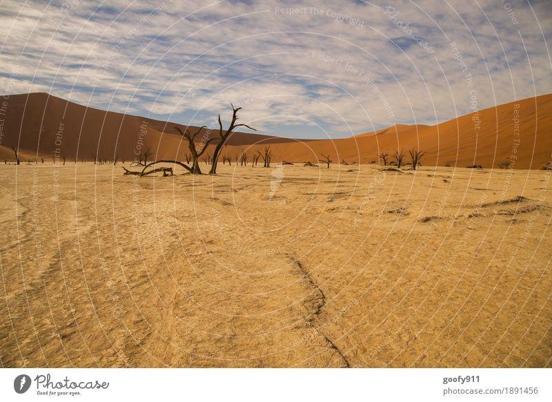 Deadvlei (Namibia) Umwelt Natur Landschaft Pflanze Tier Urelemente Erde Sand Luft Himmel Wolken Horizont Sonnenlicht Sommer Wärme Dürre Baum Hügel Wüste Düne