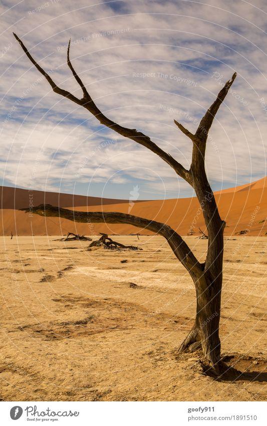 Deadvlei (Namibia) Himmel Natur Pflanze Sommer schön Sonne Baum Landschaft Wolken Tier Wärme Umwelt Frühling Herbst Holz außergewöhnlich