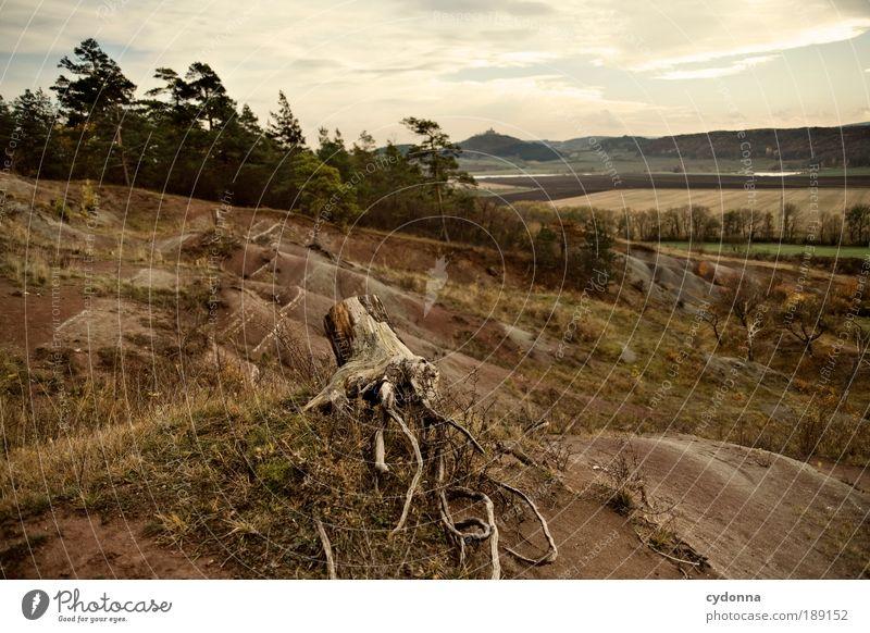 Landscape Natur Baum ruhig Ferne Wald Erholung Leben Tod Freiheit Landschaft Umwelt Wege & Pfade träumen Feld Zufriedenheit Wind