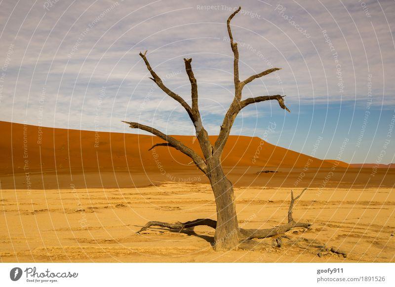 Deadvlei (Namibia) Umwelt Natur Landschaft Pflanze Tier Urelemente Erde Sand Luft Himmel Wolken Sonne Sonnenlicht Sommer Herbst Schönes Wetter Wärme Dürre Baum