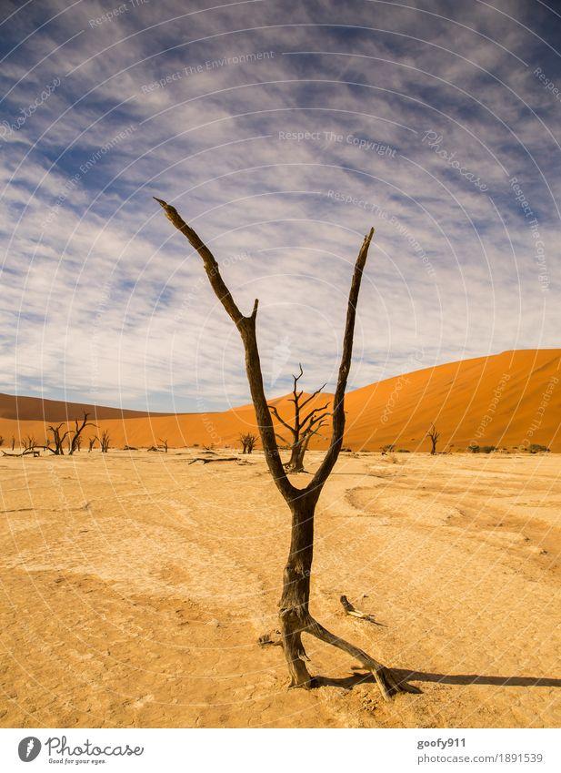 Deadvlei (Namibia) Umwelt Natur Landschaft Pflanze Urelemente Erde Sand Luft Himmel Wolken Sonnenlicht Sommer Schönes Wetter Wärme Dürre Baum Hügel Wüste Düne