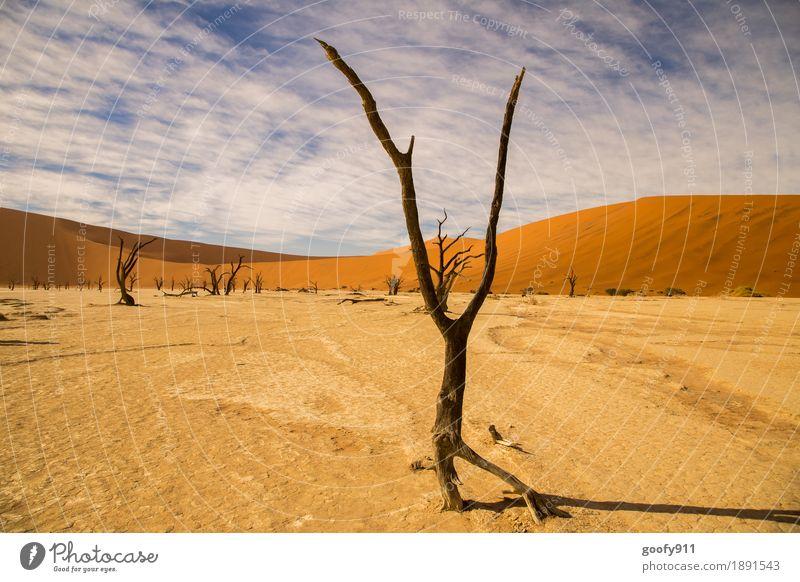 Deadvlei (Namibia) Umwelt Natur Landschaft Pflanze Urelemente Erde Sand Luft Himmel Wolken Horizont Sonnenlicht Sommer Schönes Wetter Wärme Dürre Baum Hügel