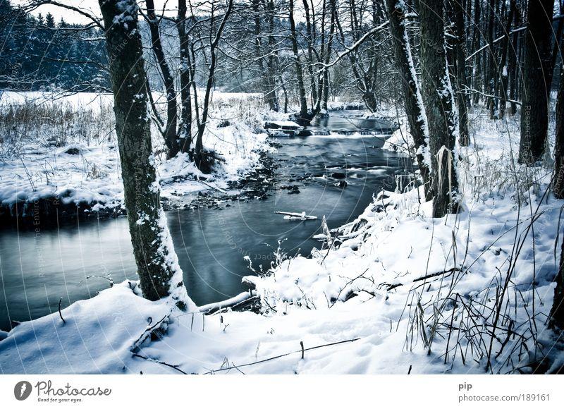 -7° Umwelt Natur Landschaft Wasser Winter Eis Frost Schnee Baum Bach Fluss Tal Waldlichtung Trauer Einsamkeit ruhig Januar Februar Erholung Vergänglichkeit