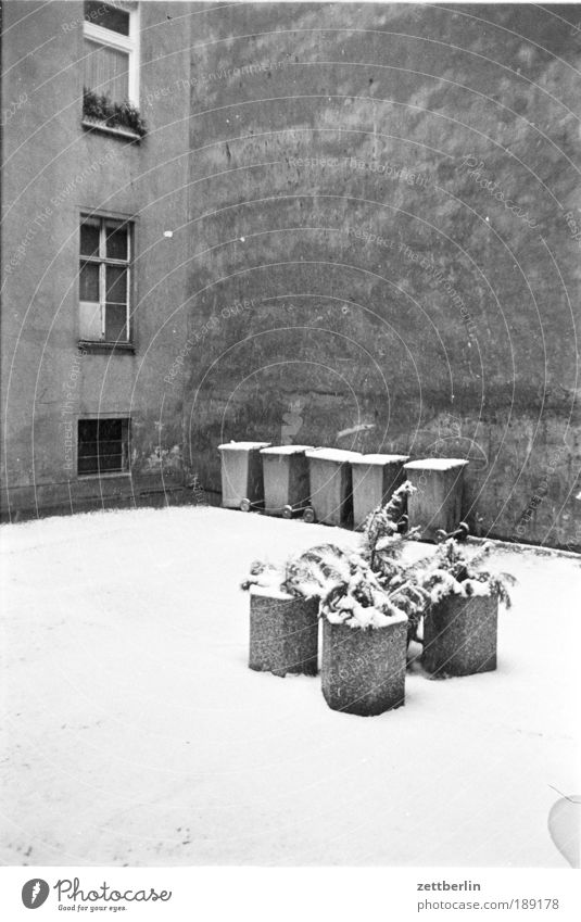 Mein erster Hinterhof Winter kalt Schnee Fenster Mauer Beton Müll Hof Müllbehälter Blumentopf Grünpflanze Kübel Textfreiraum Brandmauer Neuschnee