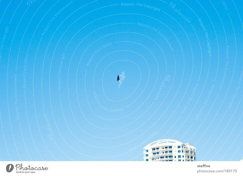 Freiheit Himmel Tier Ferne Vogel Hochhaus Schönes Wetter Amerika Gebäude Haus Wolkenloser Himmel Luftaufnahme Tampa