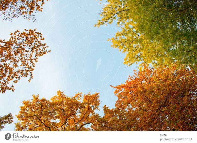 Herbstloch Natur alt Himmel Baum Blatt Herbst Gefühle Park Landschaft Wald Umwelt gold Zeit Licht ästhetisch fallen