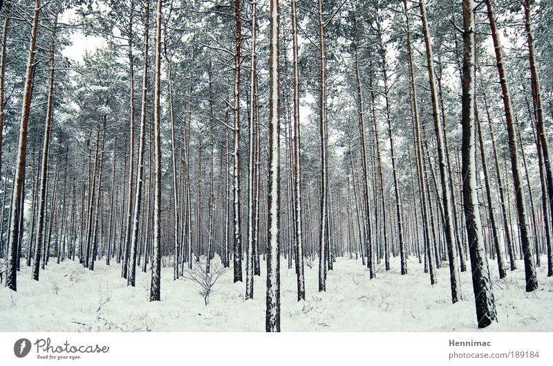 Schockstarre. Natur weiß Baum grün blau Winter ruhig Einsamkeit Ferne Wald kalt Schnee Erholung Freiheit Holz träumen