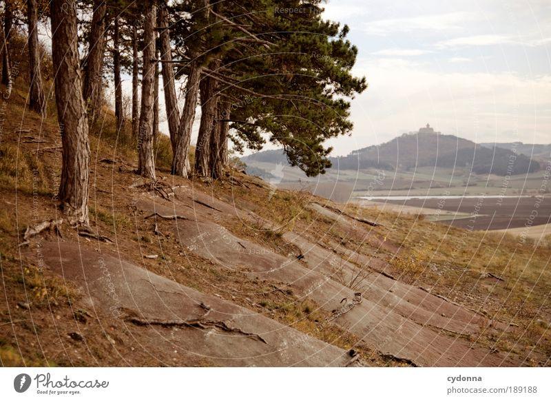 Landscape I Wohlgefühl Erholung ruhig Ferien & Urlaub & Reisen Tourismus Ferne Freiheit Umwelt Natur Landschaft Himmel Baum Feld Wald Hügel Bewegung Bildung