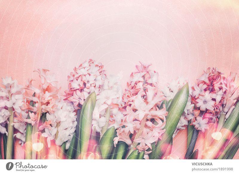 Schöne Hyazinthen Blumen auf Pastell Hintergrund Natur Pflanze Sommer Blatt Blüte Frühling Hintergrundbild Stil Feste & Feiern Design rosa