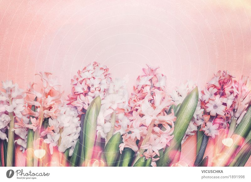 Schöne Hyazinthen Blumen auf Pastell Hintergrund Stil Design Sommer Dekoration & Verzierung Feste & Feiern Muttertag Ostern Geburtstag Natur Pflanze Frühling