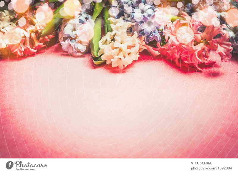 Hyacinths Blumen Feste & Feiern Valentinstag Muttertag Geburtstag Natur Pflanze Frühling Dekoration & Verzierung Blumenstrauß Liebe rosa Freude Design Stil