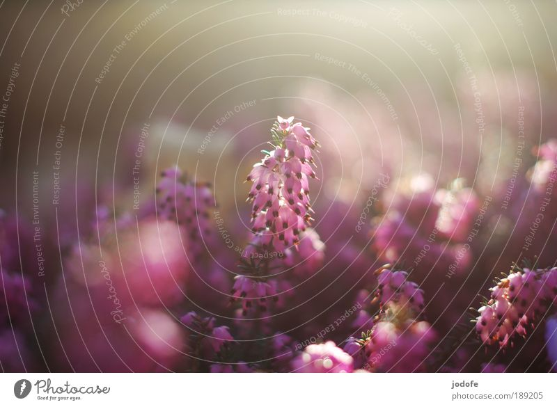 Frühlingserwachen Natur schön Blume Pflanze Gegenlicht Erholung Blüte Glück Textfreiraum Park Reflexion & Spiegelung Froschperspektive Umwelt Hoffnung