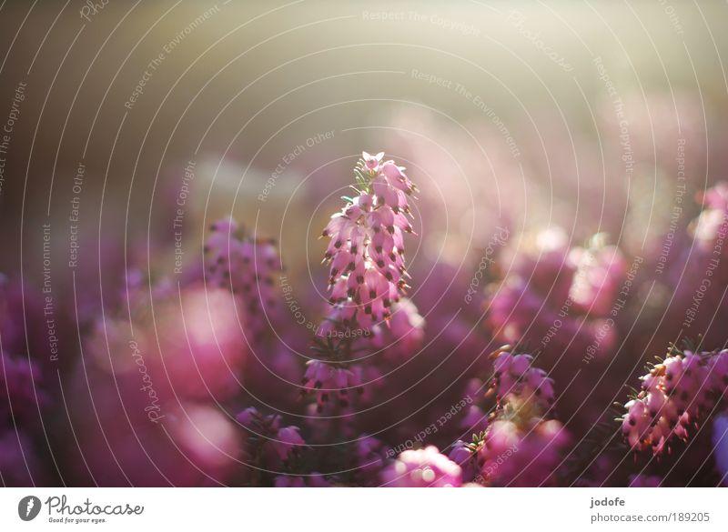 Frühlingserwachen Natur schön Blume Pflanze Gegenlicht Erholung Blüte Frühling Glück Textfreiraum Park Reflexion & Spiegelung Froschperspektive Umwelt Hoffnung ästhetisch