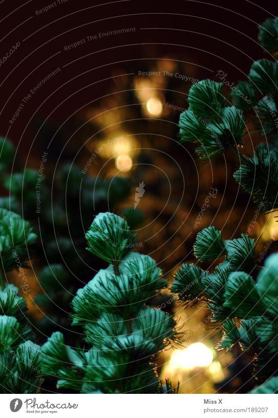 Hinterm Weihnachtsbaum Natur Weihnachten & Advent Winter Blatt dunkel Schnee Park Wärme hell Nachthimmel Tanne leuchten Zweige u. Äste Tannennadel