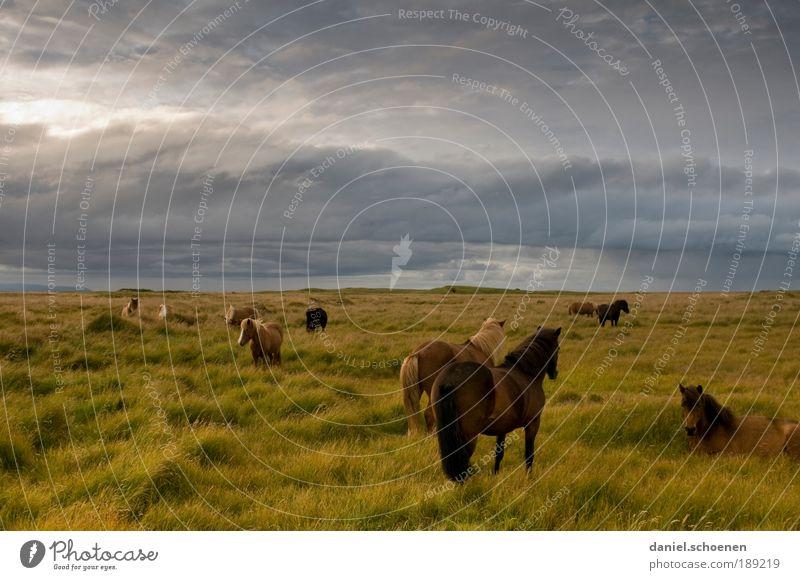 hier ist das Leben ein Ponyhof ! Natur Himmel Sommer Freude Ferien & Urlaub & Reisen Wolken Ferne Wiese Gras Freiheit Tier Wind Wetter Pferd Abenteuer Tourismus